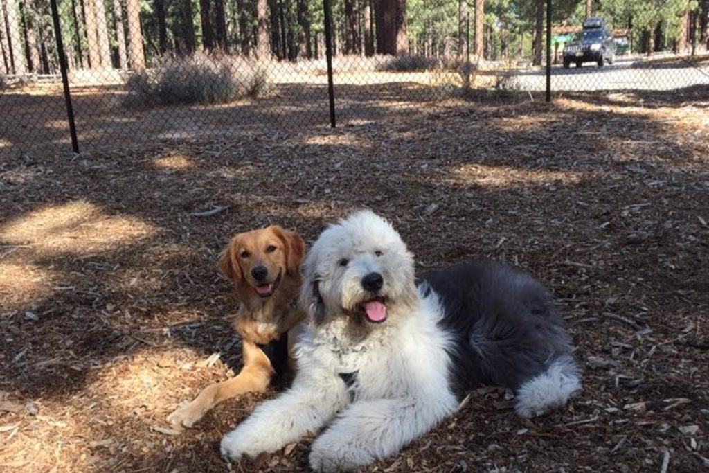 Two dogs relaxing at Bijou Dog Park